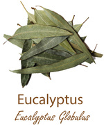 eucalyptus olympus life herbs and herbal teas ziola herbaty ziolowe