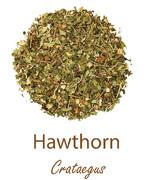 hawthorn glog olympus life herbs and herbal teas ziola herbaty ziolowe