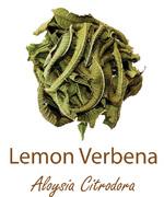 lemon verbena werbena cytrynowa olympus life herbs and herbal teas ziola herbaty ziolowe