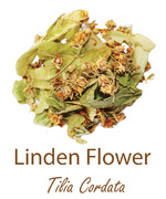 linden flower kwiat lipy olympus life herbs and herbal teas ziola herbaty ziolowe