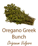 greek oregano bunch olympus life herbs and herbal teas ziola herbaty ziolowe