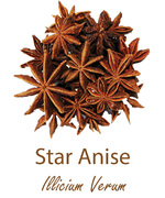 star anise olympus life herbs and herbal teas ziola herbaty ziolowe